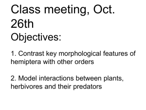 Class meeting, Oct. 26th Objectives: 1. Contrast key morphological