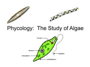 Phycology: The Study of Algae
