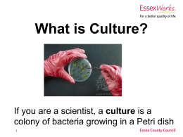 What is Culture (PowerPoint)