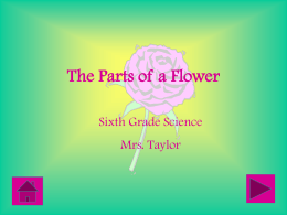 The Parts of a Flower PowerPoint