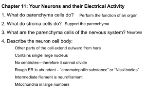 Chapter 11: Your Neurons and their Electrical Activity