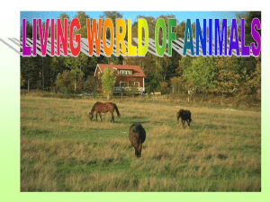 Animals - CBSE International
