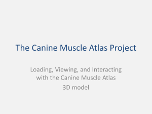 The Canine Muscle Atlas Project - Interactive Canine Pelvic Limb