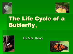 The Life Cycle of a Butterfly - Etiwanda E