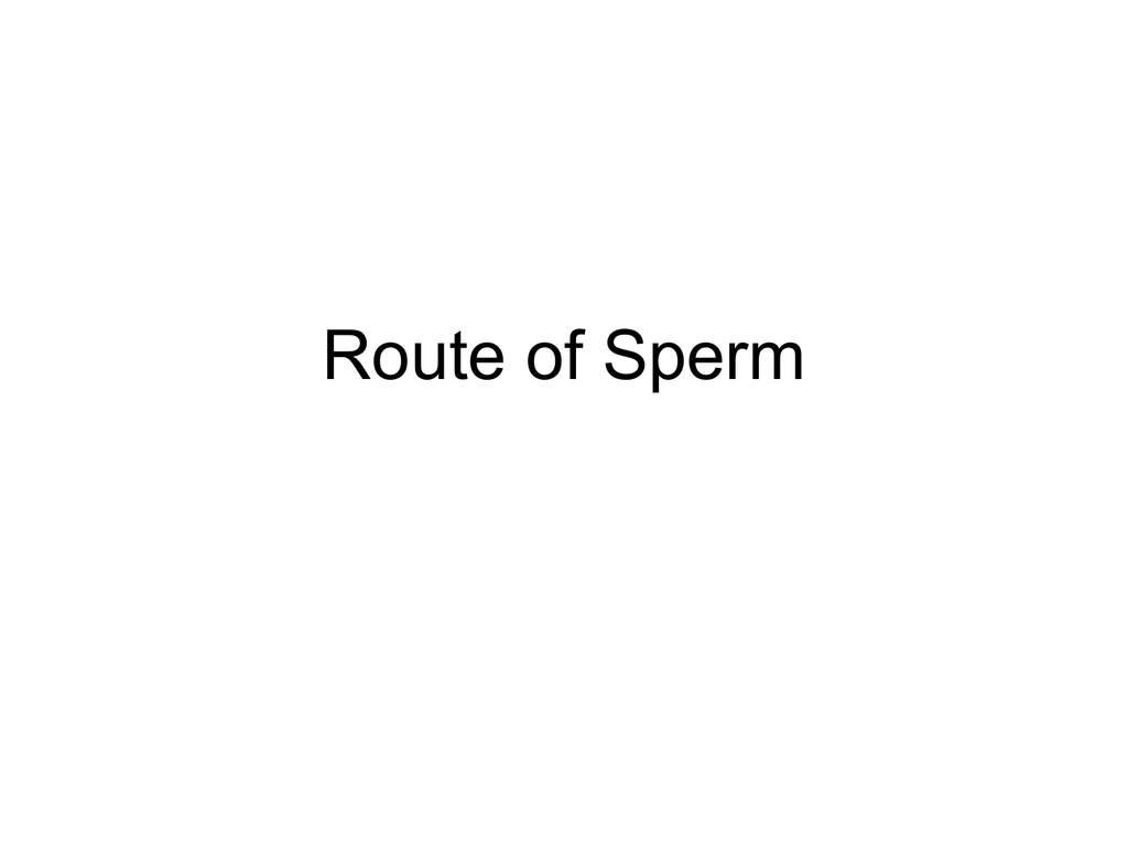 Route Of Sperm