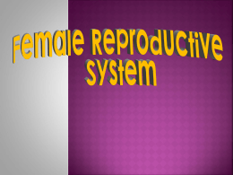 Female Reproduction System
