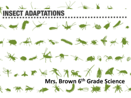 Insect Adaptations - Perry Local Schools