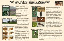 Mole Cricket Poster - University of Florida Entomology and