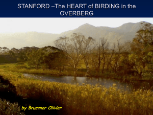 The HEART of BIRDING in the OVERBERG