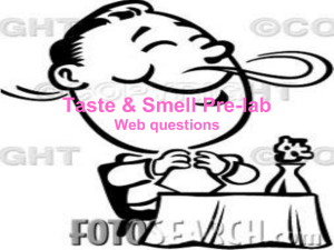 Taste & Smell Pre-lab Web questions
