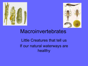 MacroInvertebrate PPT/quiz