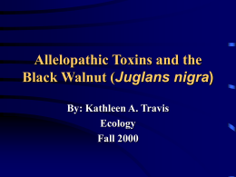 Allelopathic Toxins and the Black Walnut (Juglans