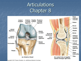Articulations Chapter 6