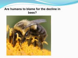 Bees_in_decline