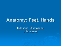 Anatomy: Feet, Hands