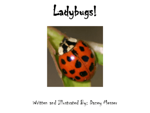 Ladybugs! - WordPress.com