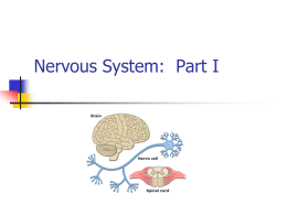Nervous & Endocrine Systems