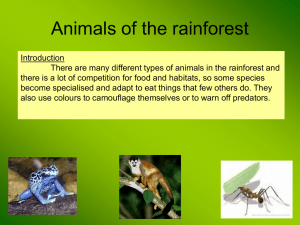Animal Adaptations in the rainforest