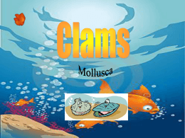 Clams- Powerpoint