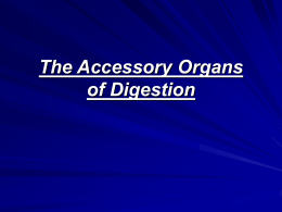 Accessory Organs & Homeostasis