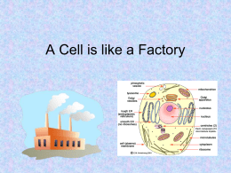 A Cell is like a Factory[1]