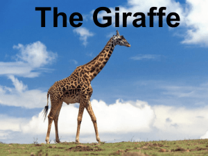 PRESENTATION THE GIRAFFE