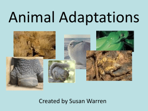 Animal Adaptations - Learning Is a Hoot!