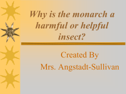 Monarch Butterfly Harmful or Helpful?