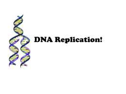DNA Replication!