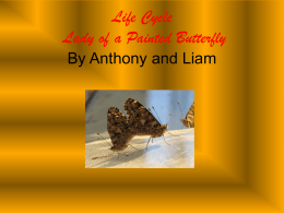 Life Cycle Anthony & Liam