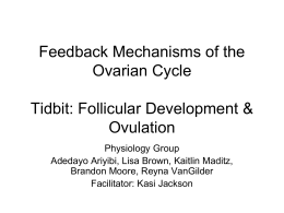 Feedback mechanisms in ovarian cycle