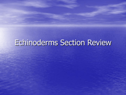 Echinoderms Section Review