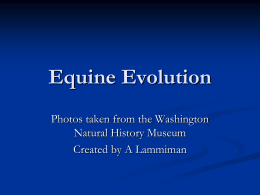 Equine Evolution - NAAE Communities of Practice