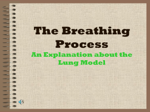 The Breathing Process An Explanation about the Lung Model