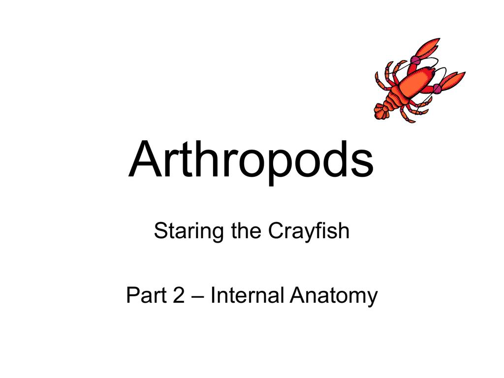 Colorful Crayfish Internal Anatomy Image Collection - Human Anatomy ...