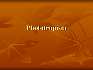 Phototropism - WordPress.com