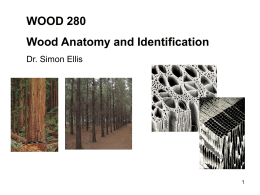 (1) Tree growth - Wood Anatomy and Identification
