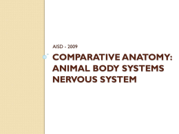Comparative Anatomy: Animal Body Systems NERVOUS SYSTEM