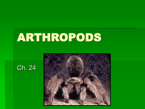 Examples of Arthropods