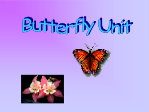 Butterfly Science Kit