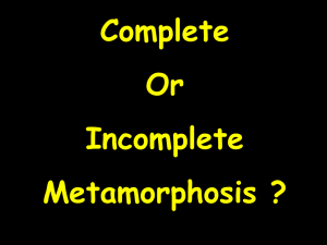 Complete or Incomplete Metamorphosis?