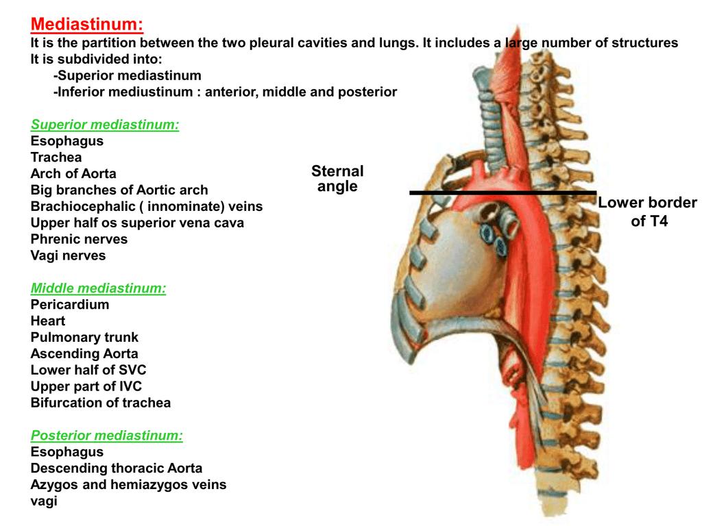 5,6-mediastinum