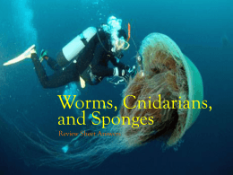 Worms, Cnidarians, and Sponges