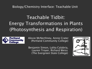 energy transformation in plants, northwest 2012