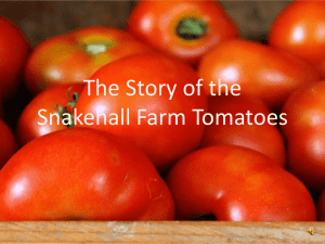 The story of the tomato