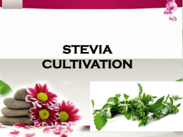 Stevia Cultivation - Organic Food and Health Products