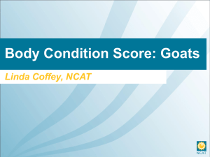 Body Condition score, goats