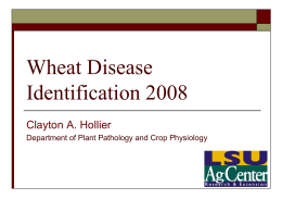 Wheat Disease Management for 2005