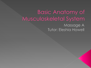MASA_PowerPoint_Basic_Anatomy_of_Musculoskeletal_System