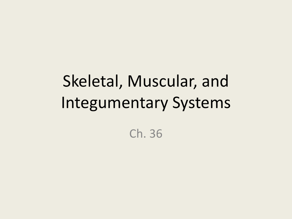 Skeletal, Muscular, and Integumentary Systems PPT